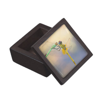 Multicolored Dragonfly Gift Box