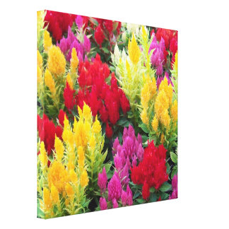 Multicolored Flowers Canvas Print