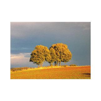multicolored maple trees in the autumn, dark sky, canvas print