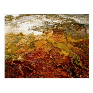 Multicolored mineral deposits in Yellowstone Postcard