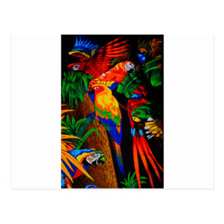 Multicolored Parrot Picture Postcard
