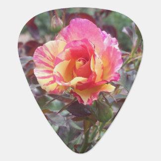 Multicolored Pink Rose Guitar Pick