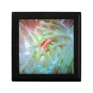 Multicolored Sea Anemone Keepsake Box