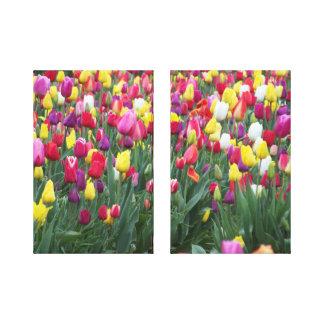 MultiColored Tulips Canvas Print