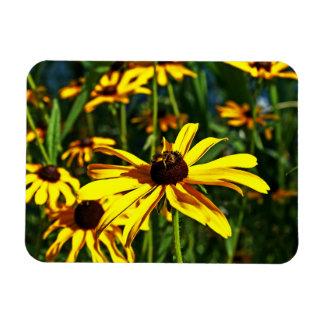 Multiple Bright Yellow Black-Eyed Susans Magnet