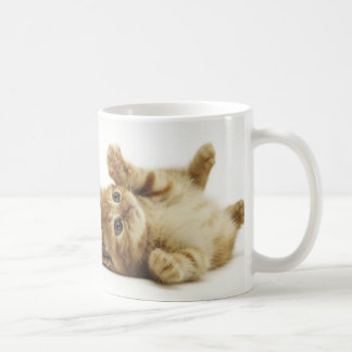Multiple can kitten magnetic cup