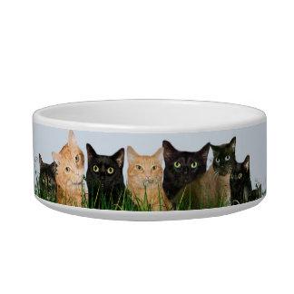 multiple kitties cat bowl
