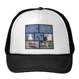 Multiple photos of seagulls hat