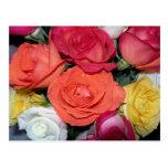 Multiple Roses Postcard