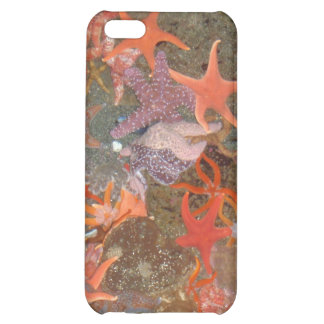 Multiple Star Fish iPhone 5C Cover