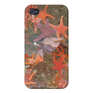 Multiple Star Fish iPhone 4 Cases