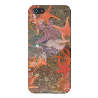 Multiple Star Fish iPhone 5 Cases