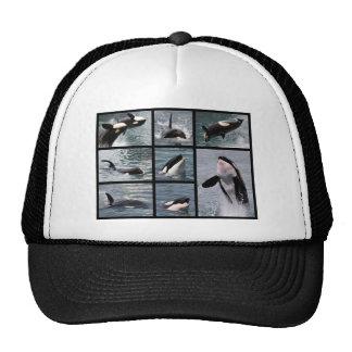Múltiplo de las fotos de orcas gorros bordados