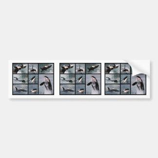 Múltiplo de las fotos de orcas pegatina para auto