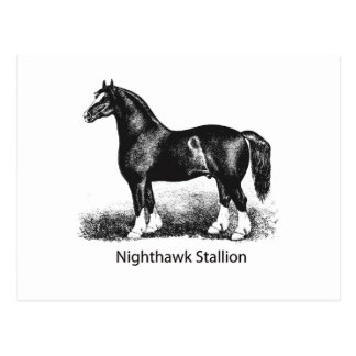 Múltiplo seleccionado StallionProduct del Nighthaw Tarjetas Postales
