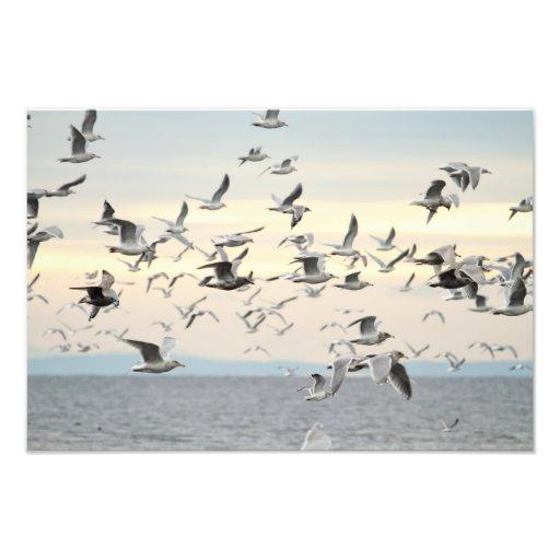 Multitud de la foto de las gaviotas fotografías