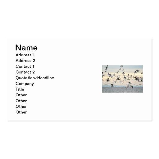 Multitud de la foto de las gaviotas tarjetas de visita