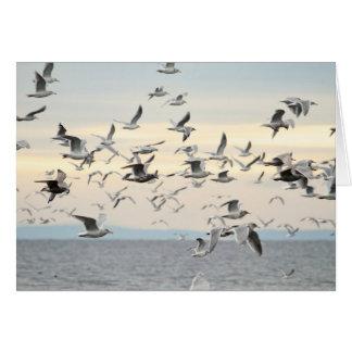 Multitud de la foto de las gaviotas tarjeta de felicitación