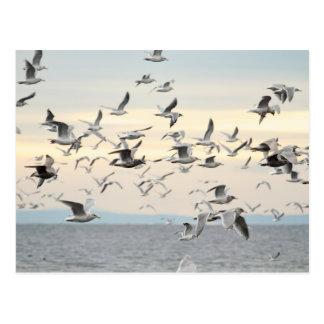 Multitud de la foto de las gaviotas tarjeta postal