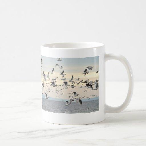 Multitud de la foto de las gaviotas tazas de café