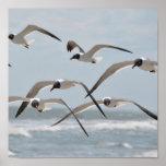 Multitud de las gaviotas de la playa que vuelan ce impresiones