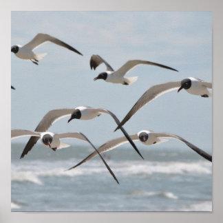 Multitud de las gaviotas de la playa que vuelan ce póster