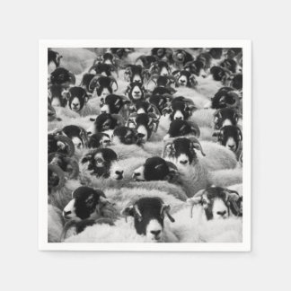 Multitud de las ovejas blancos y negros servilleta de papel