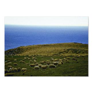 Multitud de las ovejas, Christchurch, isla del sur Invitación 12,7 X 17,8 Cm