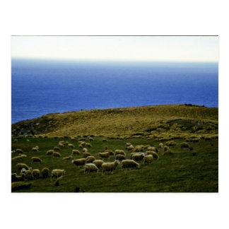 Multitud de las ovejas, Christchurch, isla del sur Tarjeta Postal