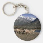 Multitud de las ovejas de cuernos, montañas detrás llavero personalizado