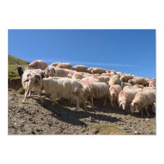 Multitud de las ovejas del Bearnaise de Basco en Invitación 12,7 X 17,8 Cm
