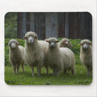 Multitud de las tierras de labrantío de las ovejas mouse pad
