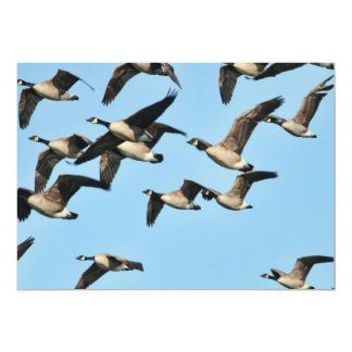 Multitud de los gansos de Canadá en vuelo Invitación 12,7 X 17,8 Cm