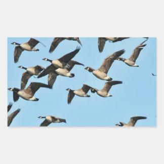 Multitud de los gansos de Canadá en vuelo Pegatina Rectangular