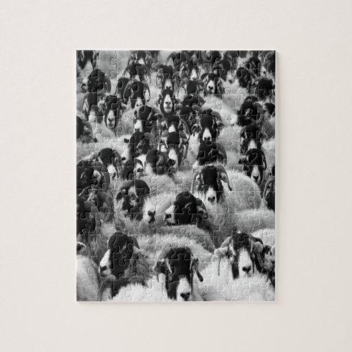 multitud de los juses y de la dirección de las ove rompecabeza