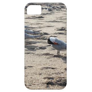 Multitud de los pájaros caspios de la golondrina funda para iPhone 5 barely there