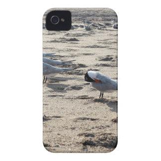 Multitud de los pájaros caspios de la golondrina iPhone 4 protectores