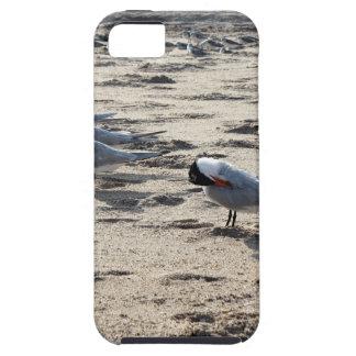 Multitud de los pájaros caspios de la golondrina iPhone 5 funda