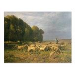 Multitud de ovejas en un paisaje postal