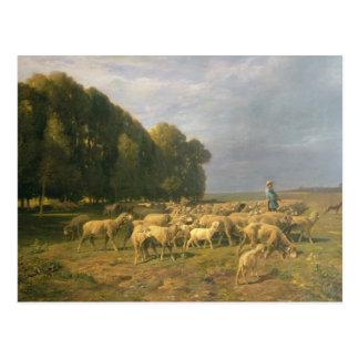 Multitud de ovejas en un paisaje tarjeta postal