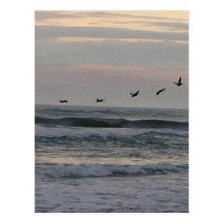 Multitud de pájaros sobre el Atlántico Tarjetas Postales