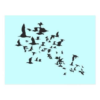 Multitud de pájaros tarjeta postal