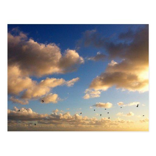 Multitud de pájaros y de la postal de la puesta de