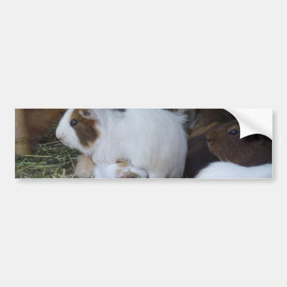 Mummy_And_Baby_Guinea_Pig Bumper Sticker