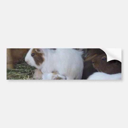 Mummy_And_Baby_Guinea_Pig Bumper Sticker