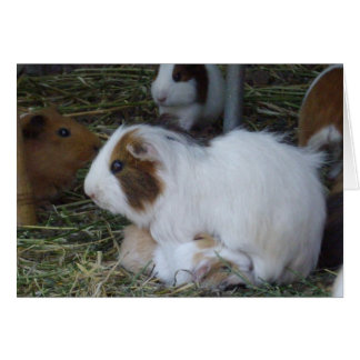 Mummy_And_Baby_Guinea_Pig Card