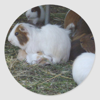 Mummy_And_Baby_Guinea_Pig_Cute_Sicker. Classic Round Sticker