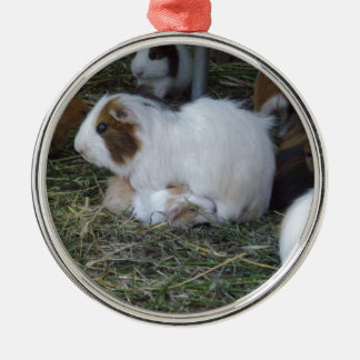 Mummy_And_Baby_Guinea_Pig Metal Ornament