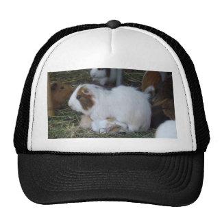 Mummy_And_Baby_Guinea_Pig_Truckers_Cap. Mesh Hats
