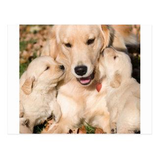 Mummy Dog and Puppies Postcard
